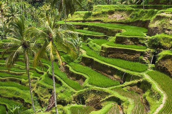 Bali Global Tour: Rice Terrace the Sacred Monkey Forest and Volcano Including Lunch