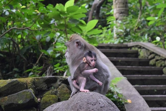 Best Of Ubud: UNESCO Rice Terraces, Monkey Forest & Waterfall