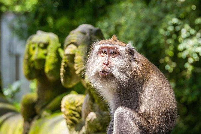 Bali Tours Sightseeing & Ubud Monkey Forest