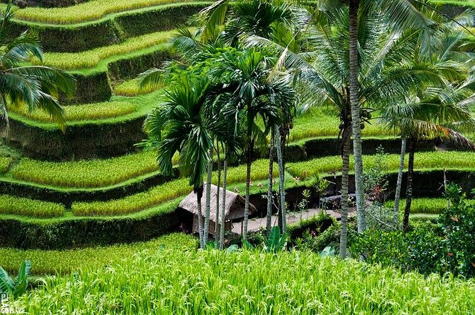 Private Sightseeing Tour Ubud Bali