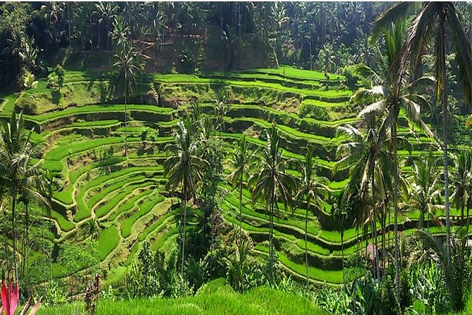 A Day Trip to Tukad Cepung & Rice Terrace