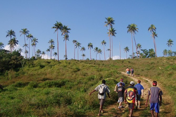 Vanuatu Guided Bush-Walking Tour from Port Vila 2019 (Lowest