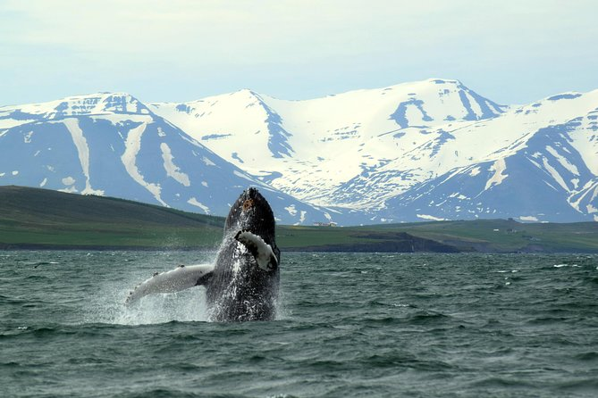 Whale Watching and White-Water Rafting from Akureyri