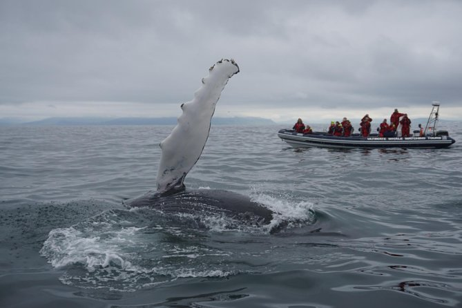 Whale Watching Small-Group Tour from Akureyri