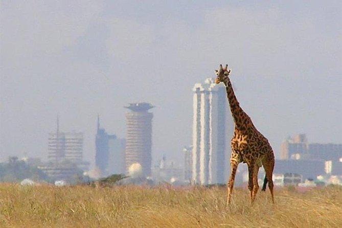 Day Tour Nairobi National Park