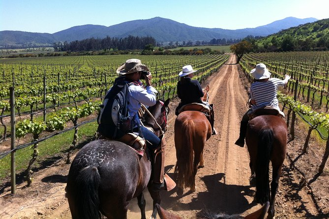Casablanca Wine Tour and Horse Riding small group from Santiago, Carbon Neutral