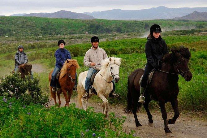 Agadir Horse Riding 2 Hours