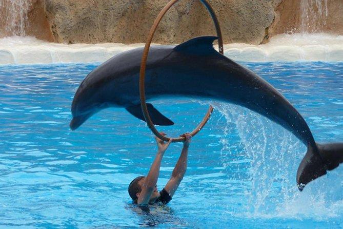 Agadir Dolphin Show Ticket mit Überweisungen