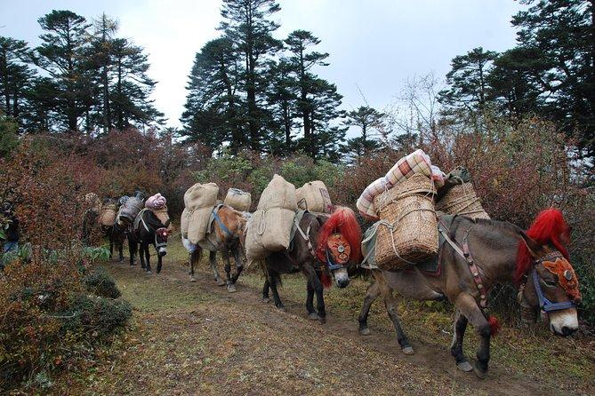 Druk Path Trek With Cultural Tour in Pristine Bhutan