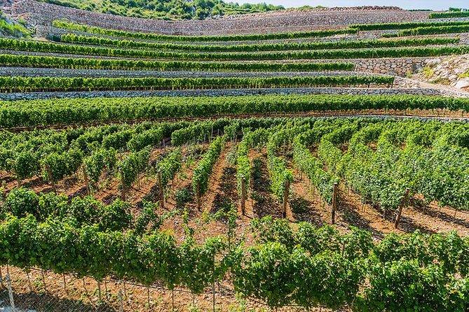 SOUL HEALING Wine Tour Montenegro - BEST PRIVATE TOUR