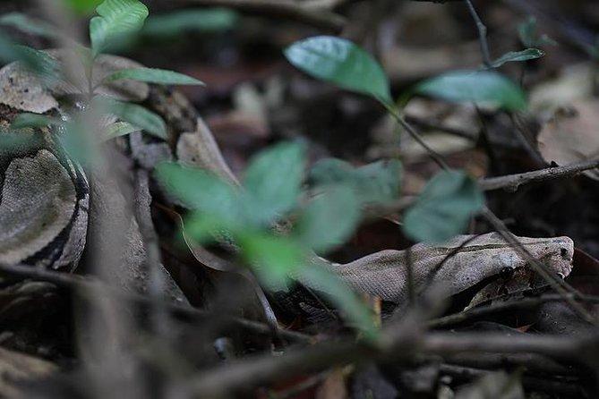 Excursão de aventura na selva amazônica de 6 dias