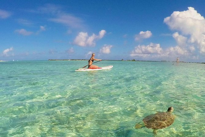 Turtle Eco Tour on Stand-Up Paddleboards or Kayaks into the National Marine Park