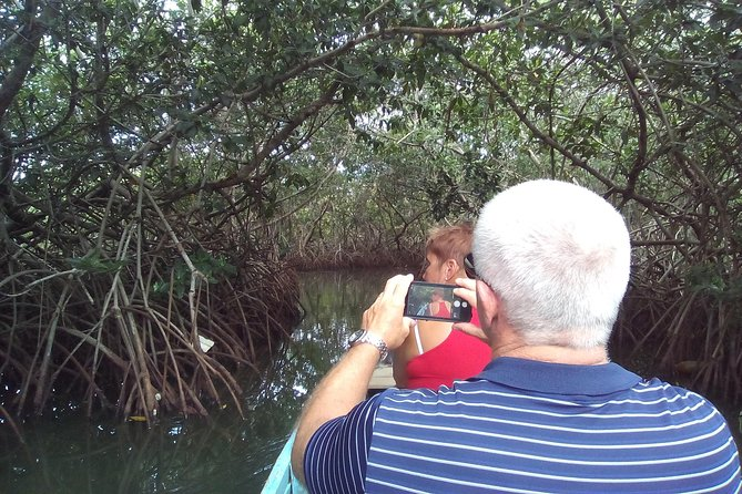 Mangroves tour for cruises.