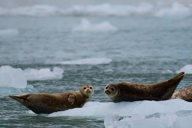 Whittier Shore Excursion: Prince William Sound Surprise Glacier Cruise