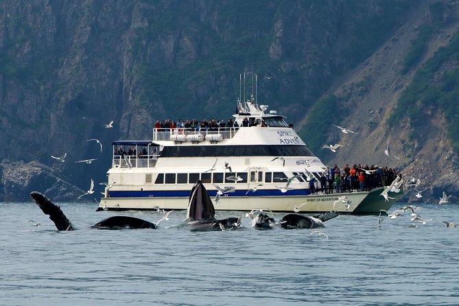 Kenai Fjords Glacier and Wildlife Cruise on Aialik Bay
