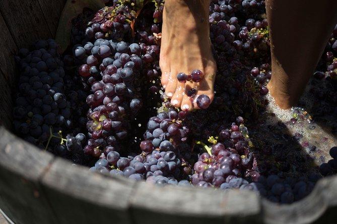 MontGras Harvest Experience
