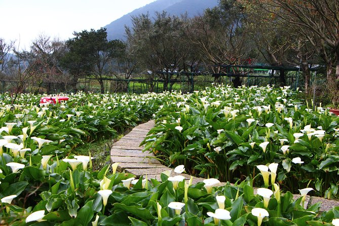 Yangmingshan National Park Day Tour