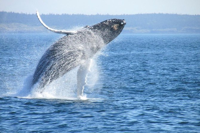 Private Whale Watching & Wine Tour