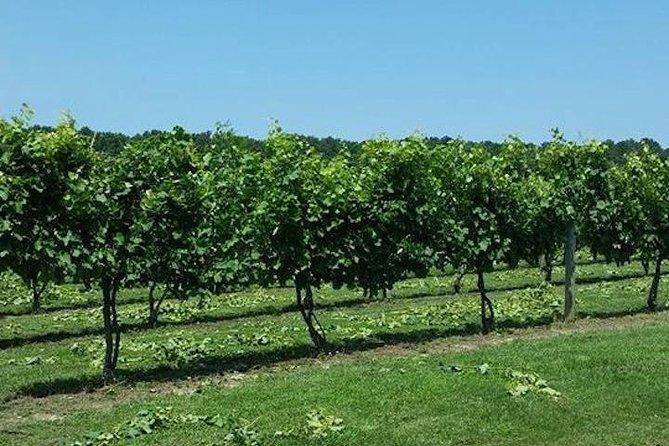 Chesapeake Region Wine Tour with Free Lunch