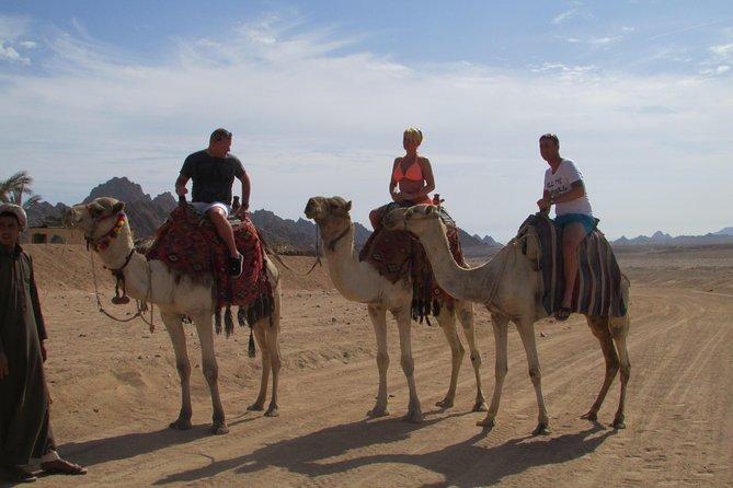 Kamelsafari fra Sharm el-Sheikh