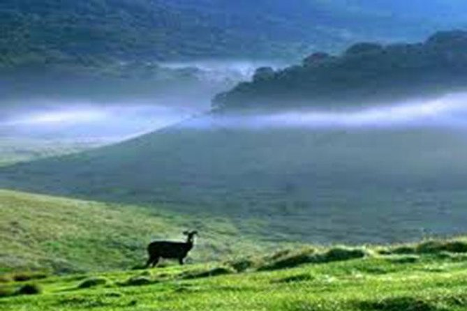 Horton Plains-World's End Tour and Tea Factory Tour From Nuwaraeliya