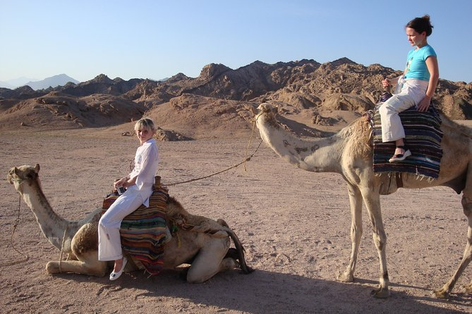 Camel riding with Bedouin evening and Oriental show