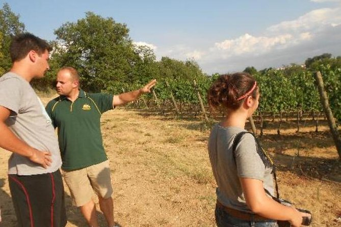 Montefalco: Winery and Oil Mill Tour in with Light Lunch