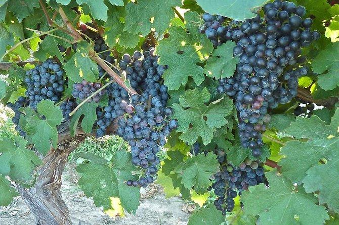 Tour sensoriale del vino e degustazione a Siena