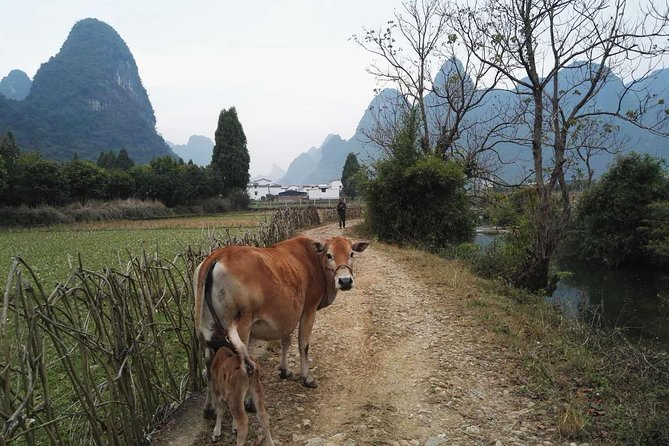 Private Hiking Tour of Li River Highlights from Xianei to Xingping