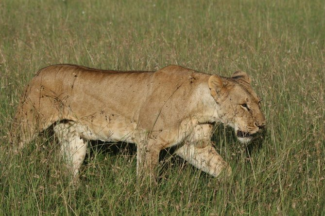 3 days masai mara safari from Nairobi