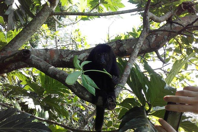 Howler Monkey Sanctuary