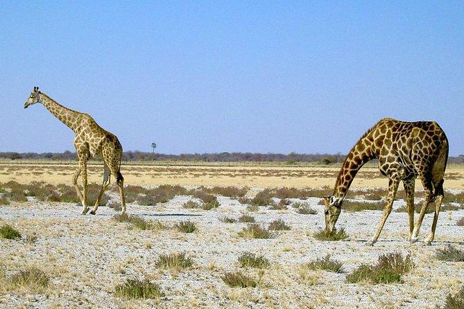 8-Day Sossusvlei, Swakopmund & Etosha National Park (Camping)