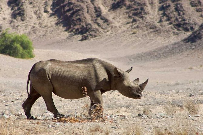 6 giorni di deserto della Namibia e parco nazionale di Etosha (campeggio)