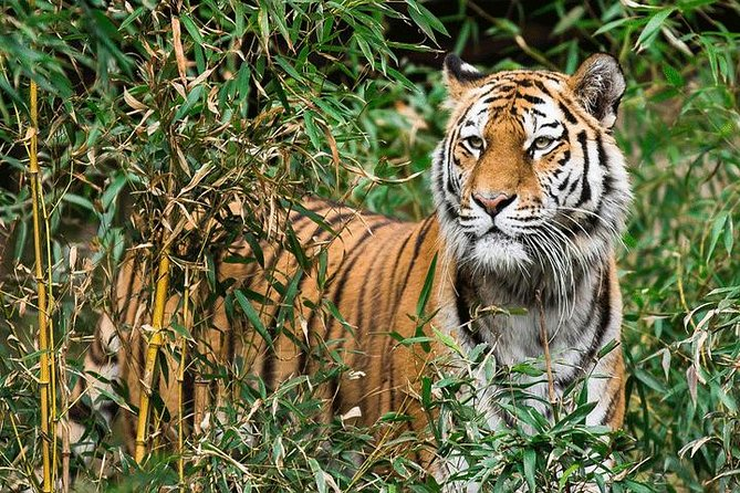 Tiger Safari at Pench National Park