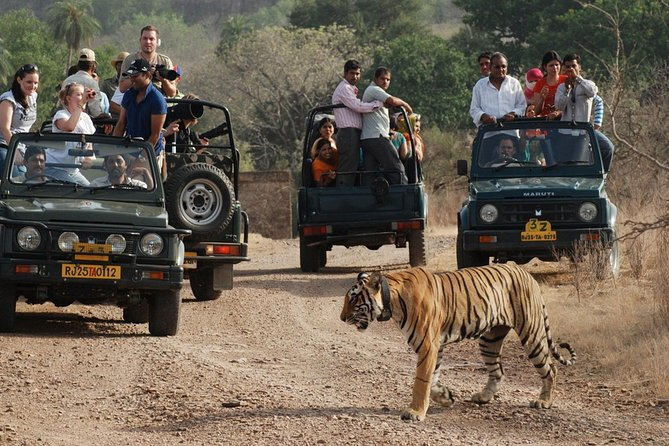 8 Days Golden Triangle Tour with Ranthambore Delhi Agra Jaipur
