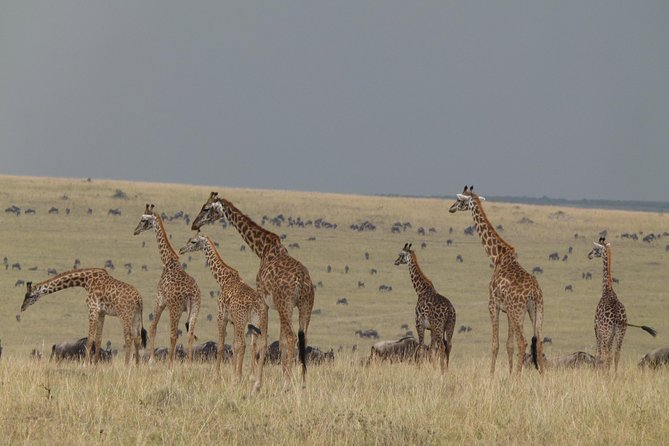 3 Days Masai Mara Migration safari_ 8th World wonder adventure