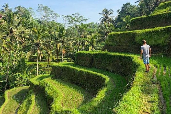Private Ubud tour - Fullday tours