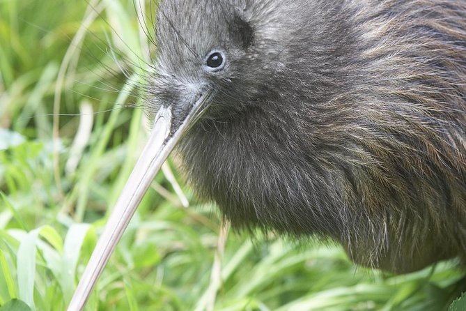 Willowbank Wildlife Reserve Day Entry & Guided Kiwi Tour