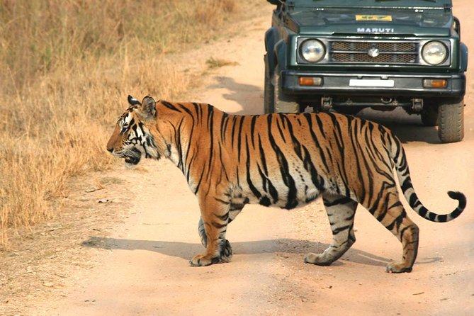 Private Tiger Safari to Panna National Park from Khajuraho
