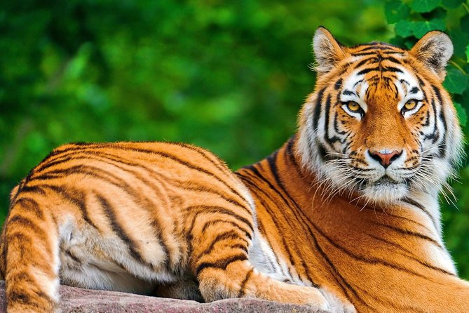 12 Days - The Best Of India -yoga, Tiger And Taj Mahal