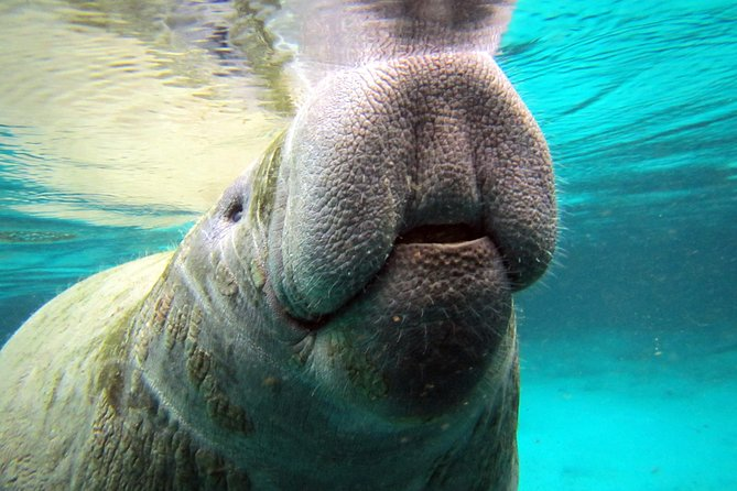 Private Swim with the Manatees Tour at Crystal River