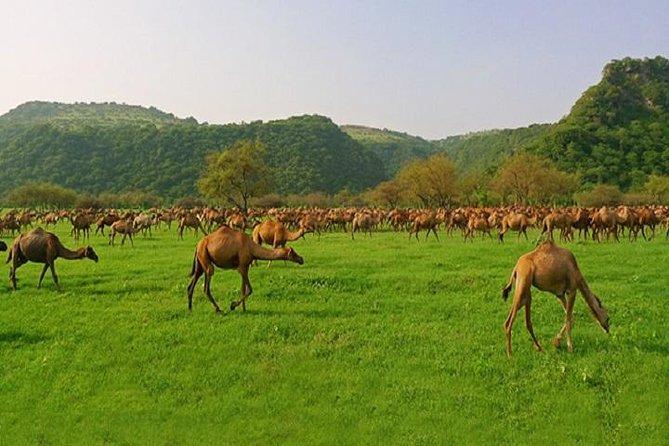 Wadi Darbat -full Day Tour