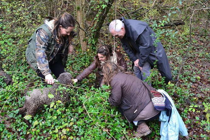 Small-Group Truffle Hunting and Wine Experience from Florence with Lunch