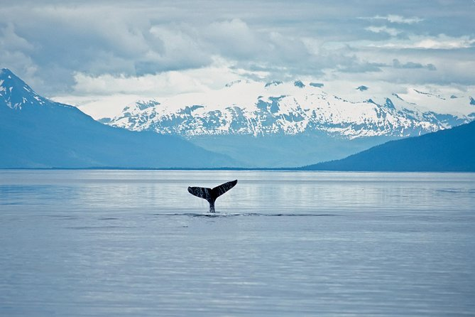Juneau Wildlife Whale Watching