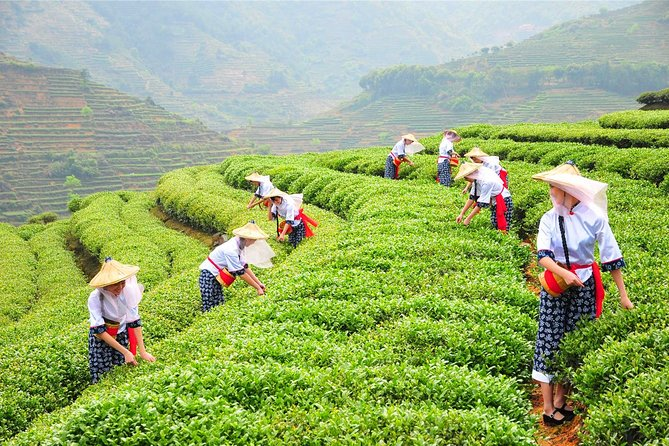 Private Tour:One Day Anxi Tea Culture and Tea Capital Tour From Xiamen