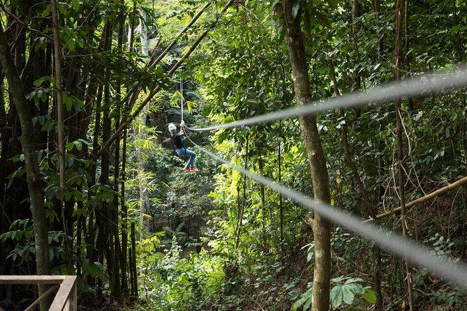 Treetop Canopy Adventure