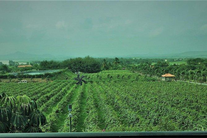 Nasik - Winery Tour & Pandavleni Caves. Mumbai - Nasik - Mumbai