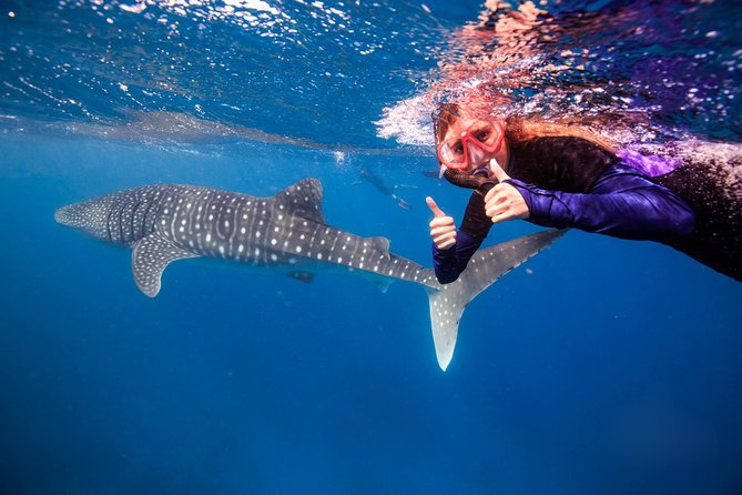 Swim with Whale Sharks or Humpback Whales - the largest fish in the world!