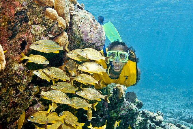 Excursão com aventura extrema e mergulho com snorkel de dia inteiro saindo da Riviera Maia