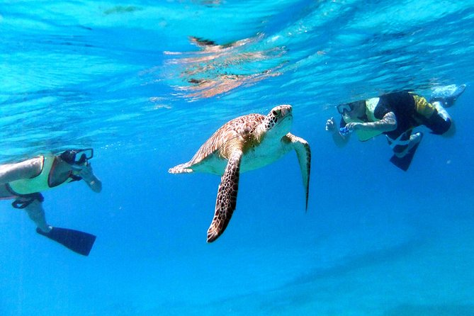 Turtle Cove Catamaran Snorkel & Sail Adventure at Little Buck Island St. Thomas